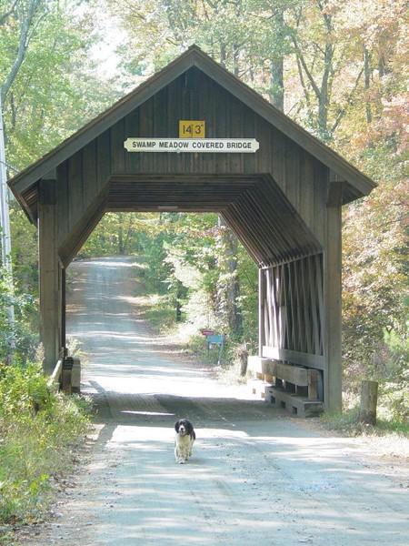 Swamp Meadow Bridge