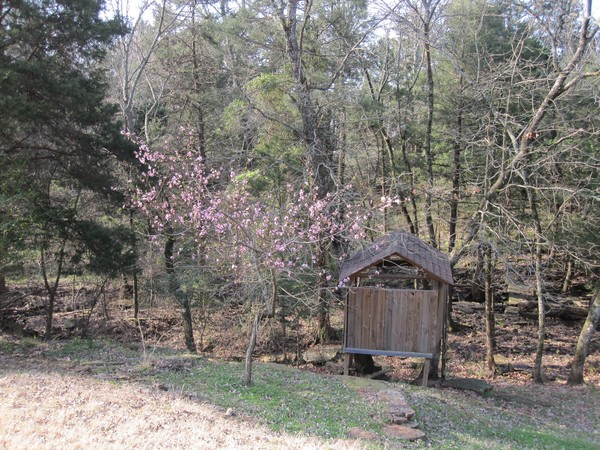 Tree House in Spring