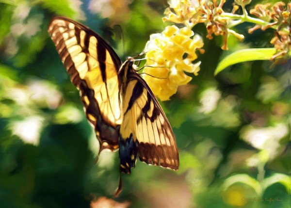 Swallowtail-digital painting-photograph-print