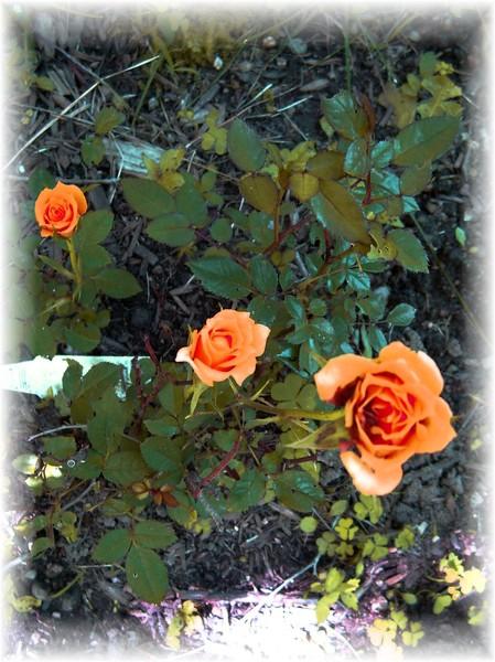 more of my garden
