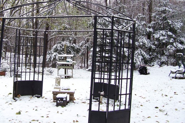 first snow,my backyard,1