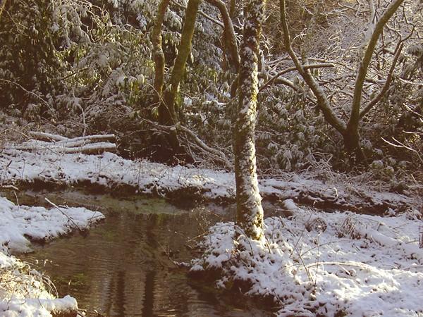 winterwoods5