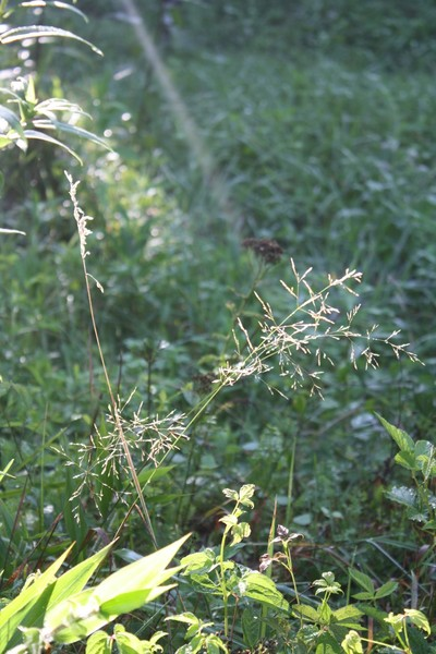 Whispering Weeds