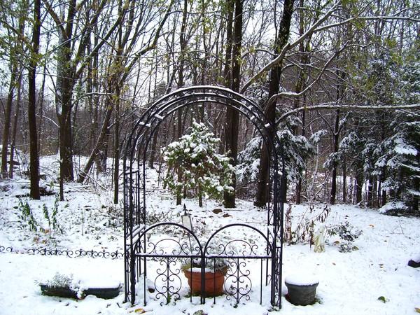 first snow,my backyard,2