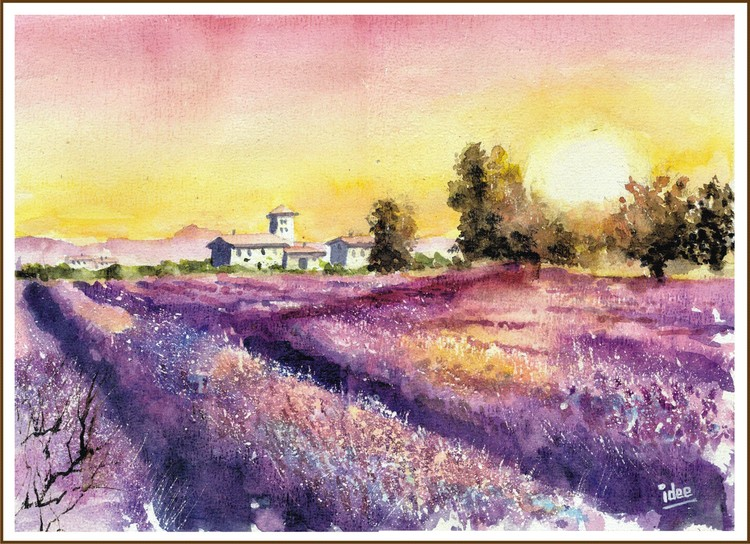 Lavender field in the sunset