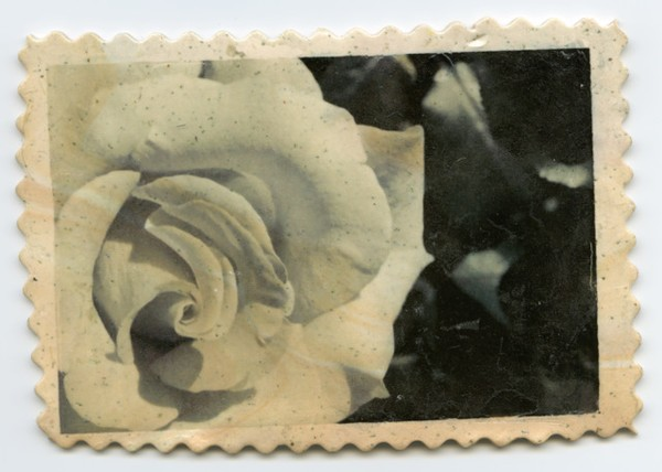 CLAY IMAGE TRANSFER Cosmic Rose