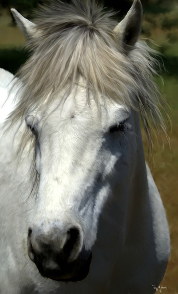 The White Horse Close up