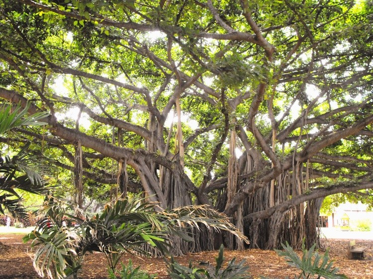 Karen Muro wonderful tree