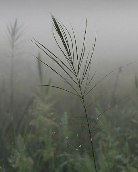 Dancing In The Fog