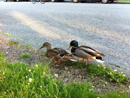 Ducks put on artwanted