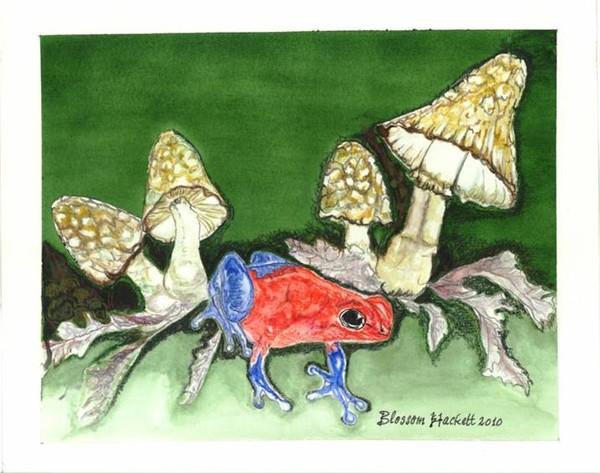 Blue-jeans dart frog