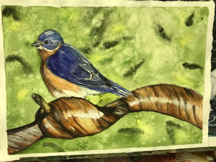 Bluebird in springtime