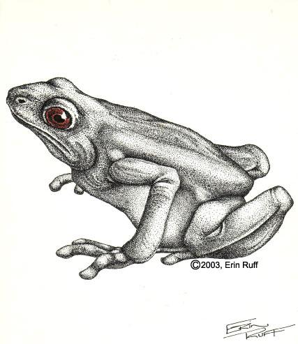 ink frog
