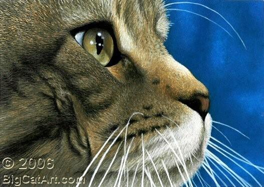 Cat's Eye V