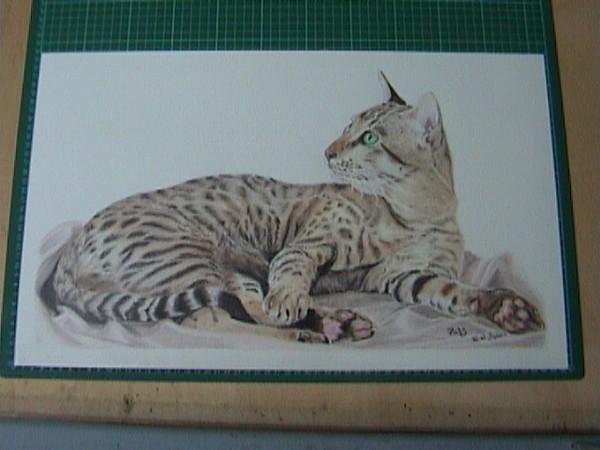 Ratz, Oriental spotted Tabby Cat