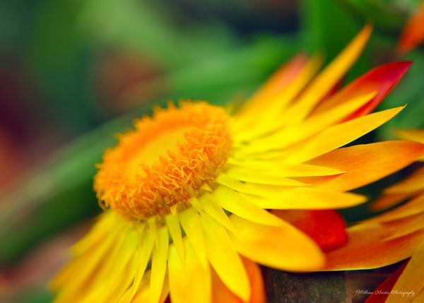 Glorious Yellow Flower