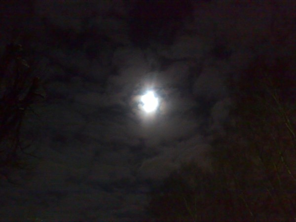Wild Winter Moon
