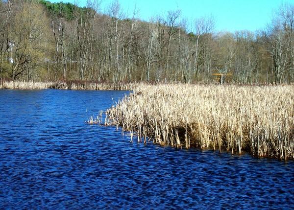 Leland's Pond in Spring 2