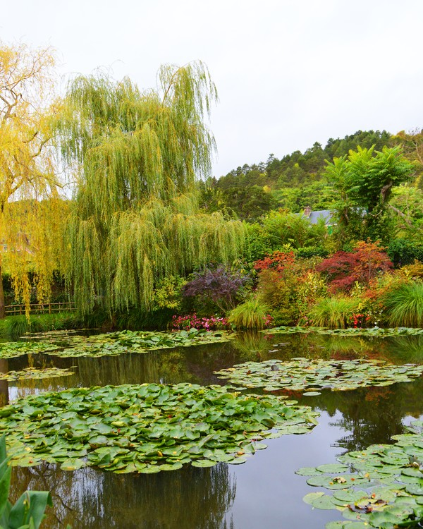 Claude Monet's water lily pond