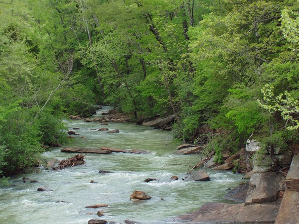 Mulberry River #4