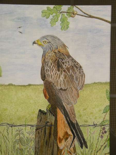 A simple Red Kite