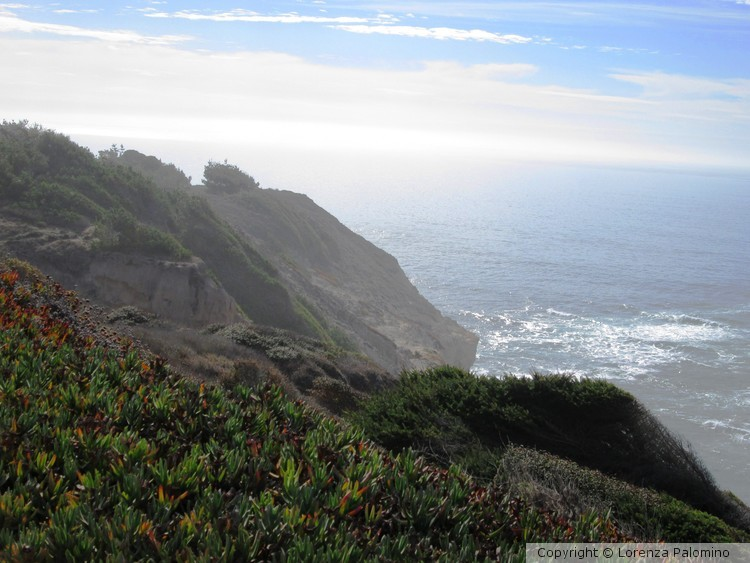 Overlooking Sea Cliff