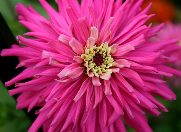 Sea Flowers - Pink