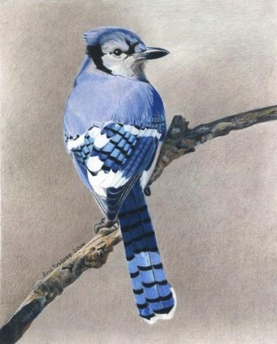 Big Blue (Jay)