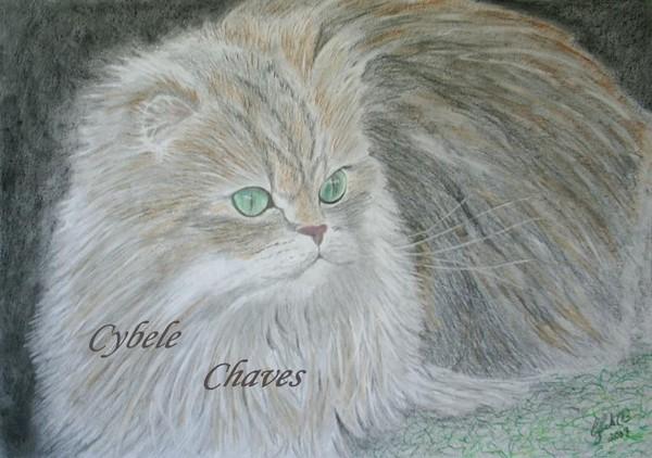 Cat 29