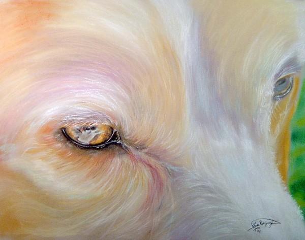 Joes eyes