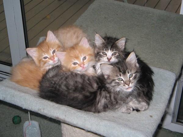 Fernwood Kittens