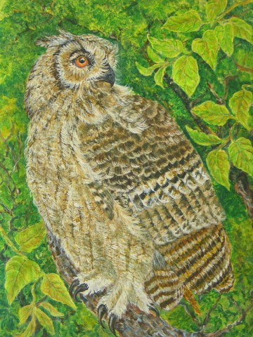 forest eagle owl 42x47