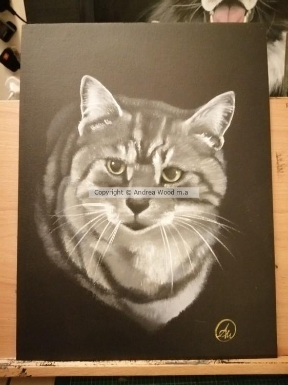 Cathy's cat