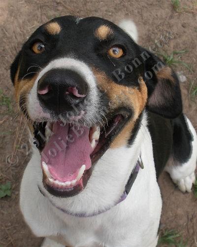Hound Dog (Muttley)