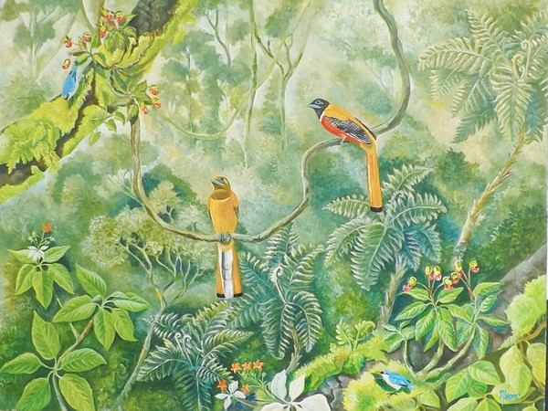 Malabar Trogons in the forest