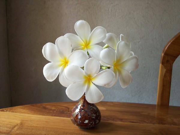 Araliya Flower