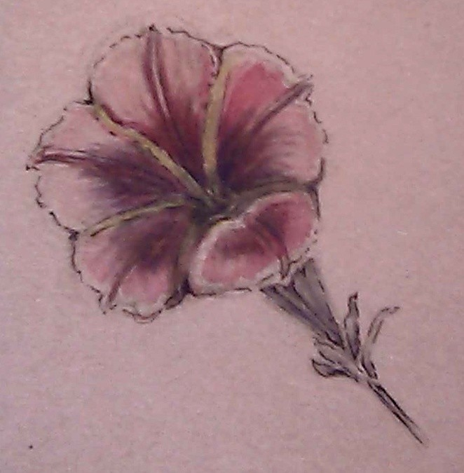 Pink Morning Glory Watercolor