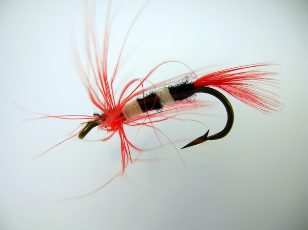 Macro - Trout Fly