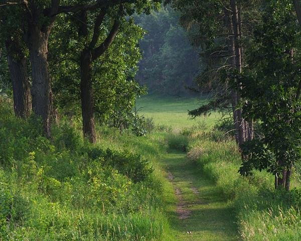 A Summers Walk