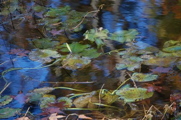 pond scheme