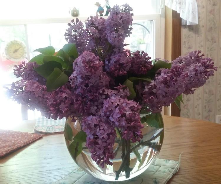 Lilacs, Smells so good.