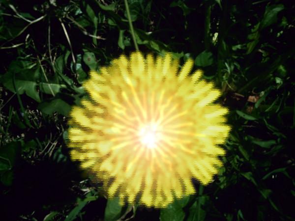 Exploding Dandelion