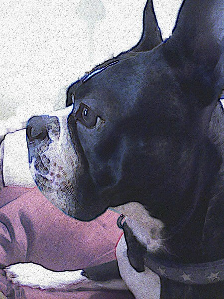 Snap On Guard