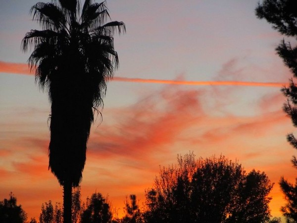 Sunset Lines 1