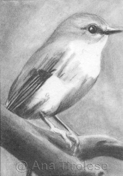 Shiney Eye (Bird) - ACEO