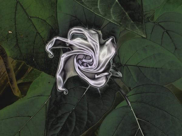 blossom-secret