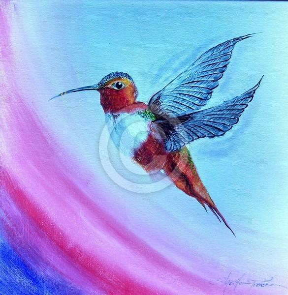 Hovering Hummingbird 3