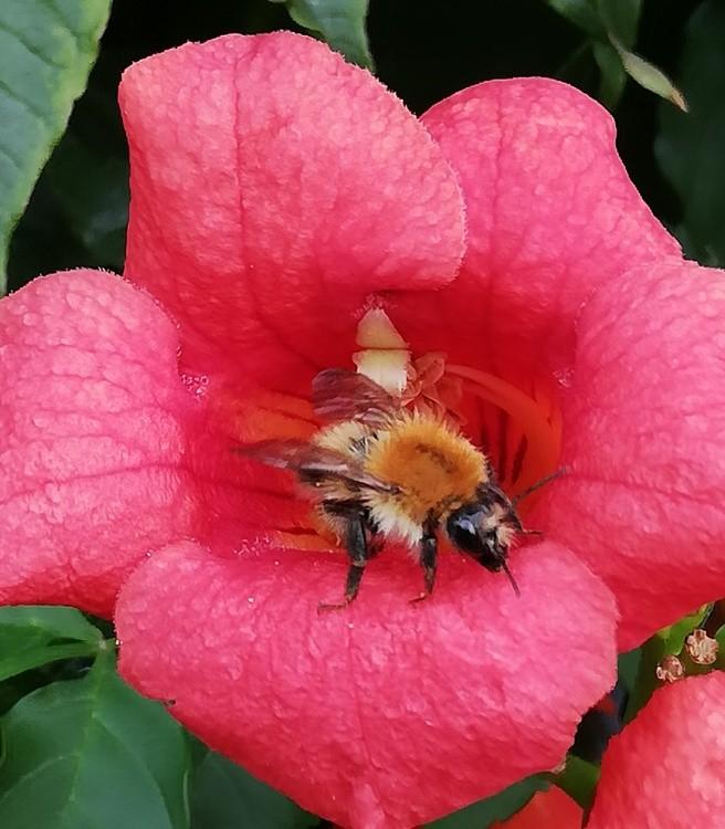 HAPPY BEE !!!!