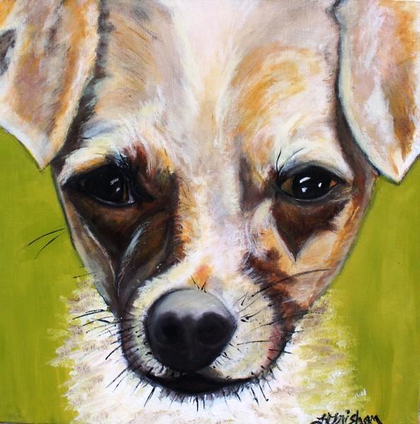 Chihuahua Mix- Roxie