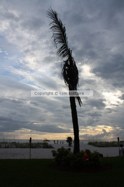Palm Stripped by Wind